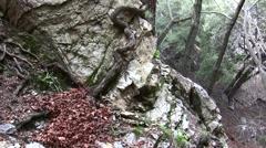 Placerita waterfalls pan-up rocky canyon wall-tree Stock Footage