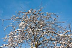 Tree in wintertime covered by snow Stock Photos