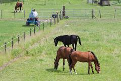 Grazing horses in a meadow with boundary - stock photo