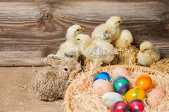 Young easter chicks in the nest Stock Photos