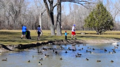 Family Feeding Ducks Stock Footage
