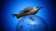 Pigeon Bird standing on street lamp Verona Italy Veneto Stock Footage