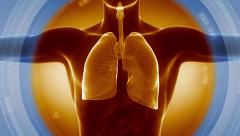 LUNGS detail antomy x-ray scan Stock Footage
