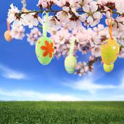 Easter eggs hanging on the almond tree Stock Photos