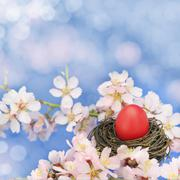 Easter egg in the nest on the almond tree Stock Photos