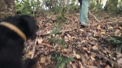 Dog searching truffles POV Stock Footage