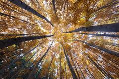 Autumn forest treetops (intentionally distorted image; shot with Stock Photos