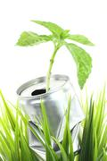 Aluminum can with growing plant on the green grass Stock Photos