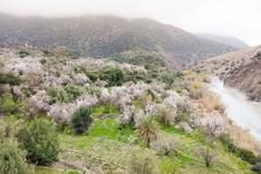 North african mountain valley in springtime. Stock Photos
