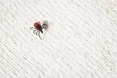 Tick - parasitic arachnid blood-sucking carrier of various disea Stock Photos