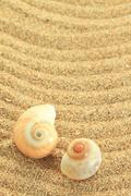 Gastropod shell on the sand - stock photo