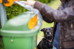 Do not let your dog foul! - Young woman grabbing a plastic bag i Stock Photos