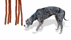 Great Dane and dogs. Stock Photos