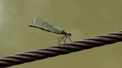 Dragonfly standing on the rope, then flying away. Insect. Macro. Close up. Stock Footage