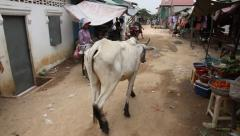White cow walks through Asian slum market street Stock Footage