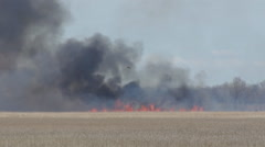 Marsh Fire and Smoke 1 Stock Footage