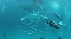 Manta Ray flying through fish Stock Footage