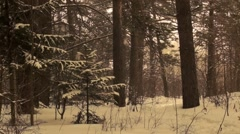 snow in the forest 1 - stock footage