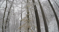 3217 Lost Man Looking Up in Snow Storm in Forest POV, 4K Stock Footage