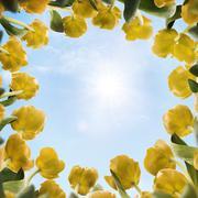 Sunny Tulips Stock Photos