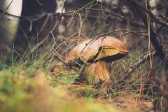 Wild mushroom in the forest Stock Photos