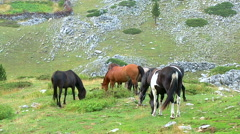 Horses graze on the mountain pastures - stock footage