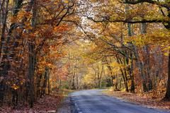 Vivid fall colors in forest - stock photo