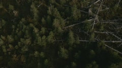 Hurricane Lothar 1999 | Deadwood aerea in the Black Forest mountains, Germany Stock Footage