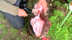 Shepherd skinning a skin from head of freshly slaughtered domestic ram Stock Footage