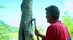 Man takes off the bark of a tree with a axe in the forest Stock Footage