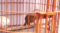 A bird cage Stock Footage