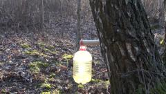 Fresh healthy spring birch sap drops in plastic bottle Stock Footage