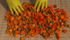 Calendula marigold medical flowers for drying on table Stock Footage
