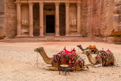 Stock Photo of Petra. Camels at the Treasury