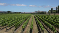 Vineyard, Esk Valley, Hawkes bay, New Zealand, sunny day Stock Footage