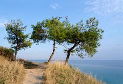 Three pine trees on a hill on a background of the Aegean Sea - stock photo