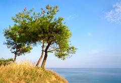 Three pine trees on a hill on background of blue sky and sea - stock photo