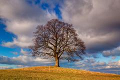 Memorial maple tree on the mystic place in Votice, Czech Republic Stock Photos