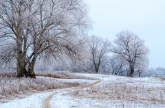Trees in hoarfrost in the early twilight in December Stock Photos