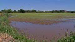Wet rice field in Portugal, Costa Alentejana Stock Footage