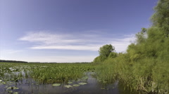 Deepwater Marsh Time Lapse Stock Footage