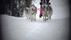 Sled Dog Race Stock Footage