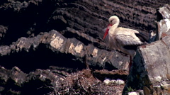Stork in the nest#6 Stock Footage