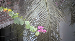 Flower swinging in the wind Stock Footage
