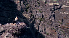 Storks in the nest #5 Stock Footage