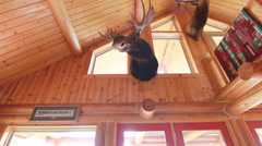 Moose mount interior hunting house dolly Stock Footage