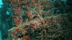 Coral growing on artificial reef underwater Stock Footage