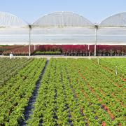 Greenhouses. - stock photo