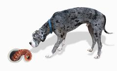 Great Dane and the Octopus. - stock photo