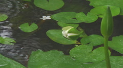 Water flowers at the Golden Mount in Bangkok, Thailand Stock Footage